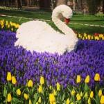 Tulpenfestival6